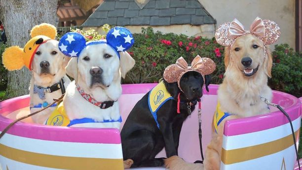 These service dogs visiting Disneyland will make your day 14