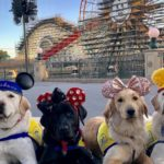 caninepups 150x150 - These service dogs visiting Disneyland will make your day
