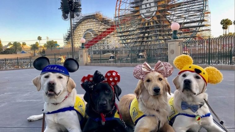 These service dogs visiting Disneyland will make your day 12