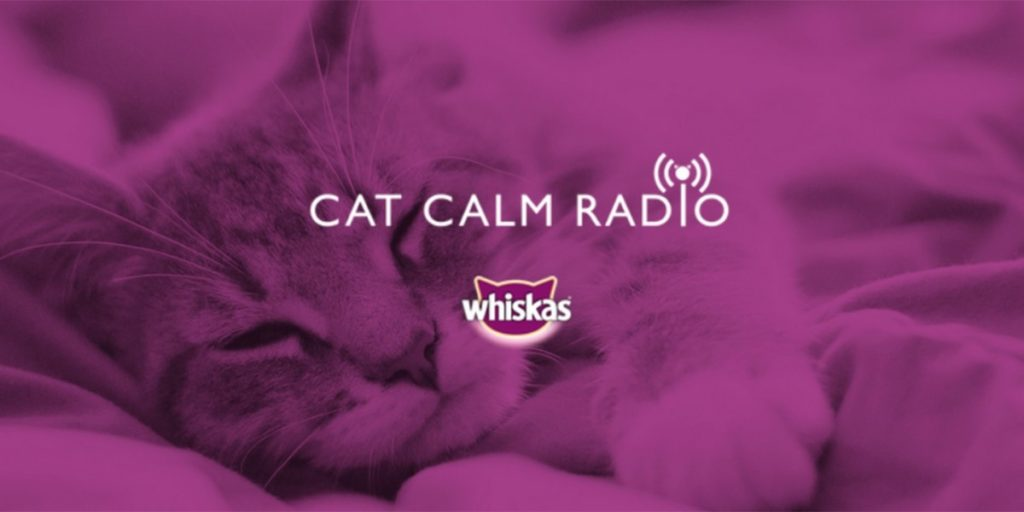 Cats now have their own radio station 16