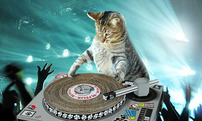 Cats now have their own radio station 15