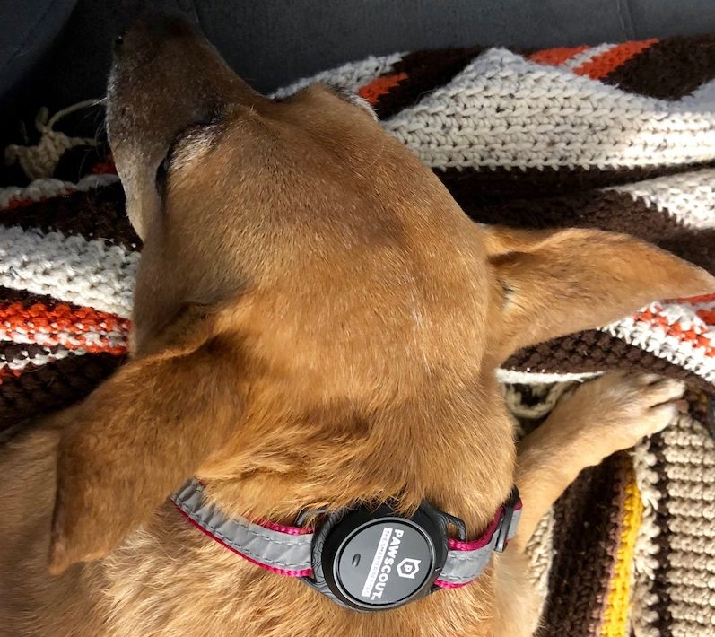 Pawscout Pet Tag Tracker review: This $20 tracker could save your dog's life 13