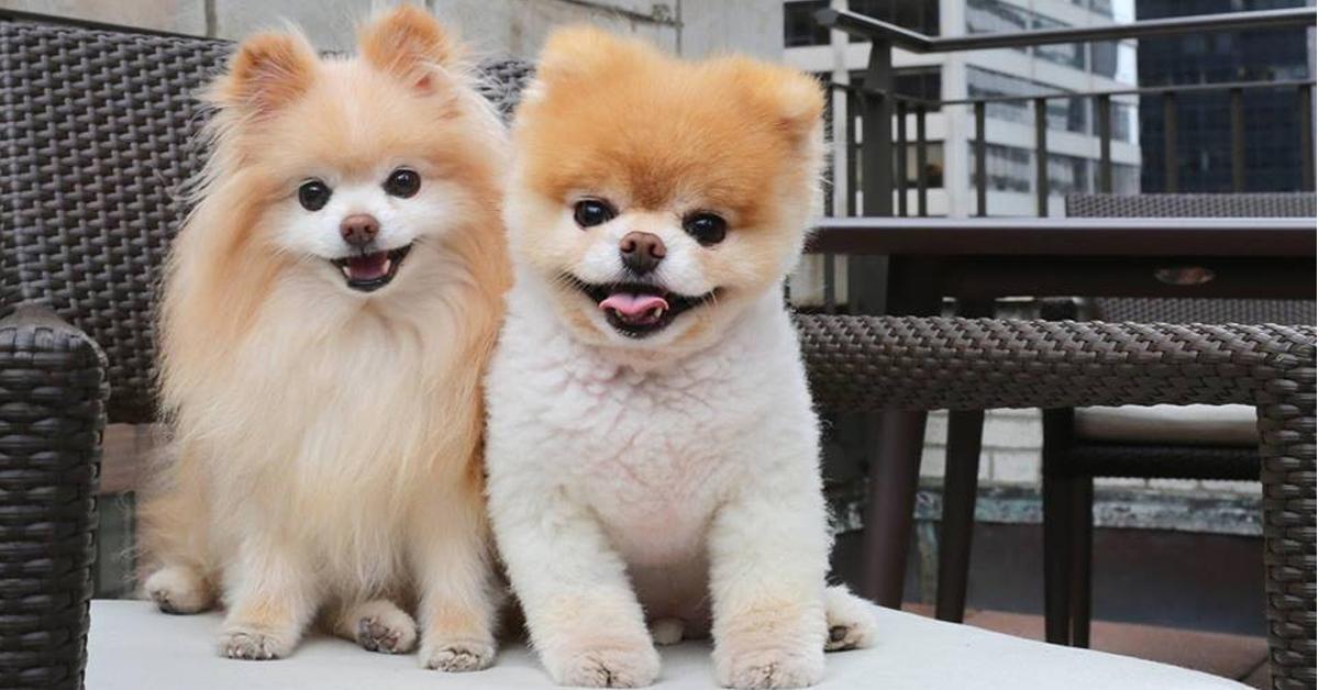 Boo and Buddy