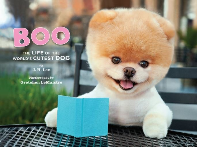 Boo: The Life of the World's Cutest Dog book cover