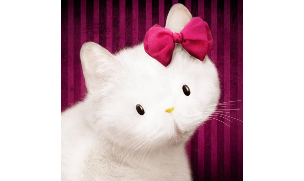Fluffy Hello Kitty cat