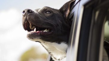 Uber will finally transport your pets with no questions asked 16