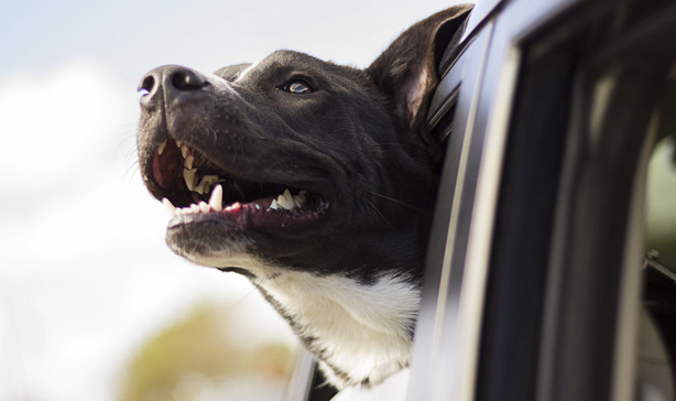 Uber will finally transport your pets with no questions asked 12