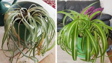 These before-and-after photos of rescued plants are unbelievably inspiring 13