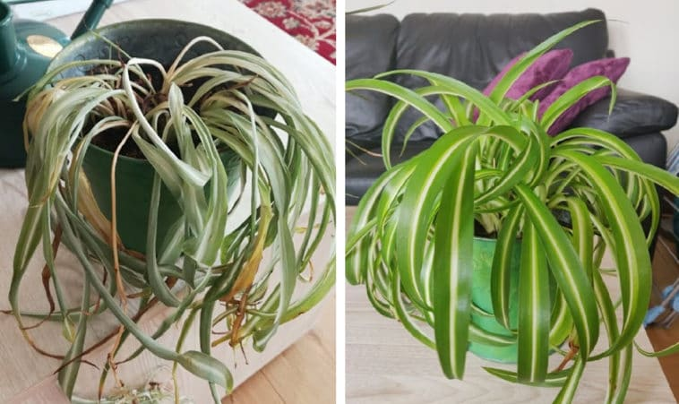 These before-and-after photos of rescued plants are unbelievably inspiring 11