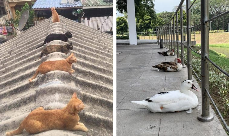 25 times animals were spotted practicing social distancing better than humans 12