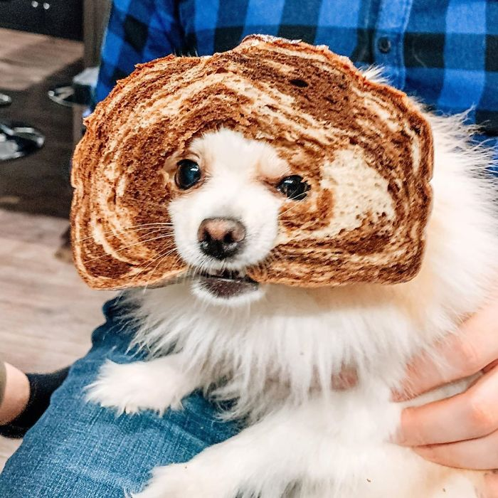 angry-doggo-vs-bread
