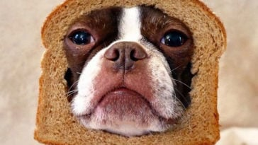 Hilarious photos of pets in bread 14