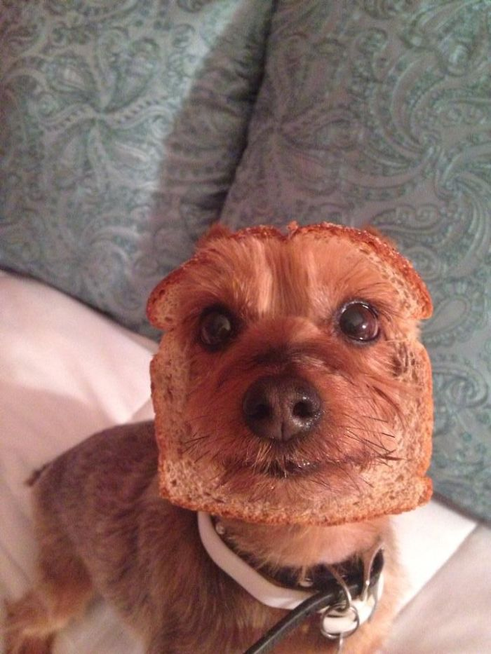 Hilarious photos of pets in bread 13