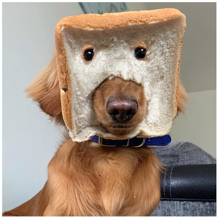 Hilarious photos of pets in bread 12