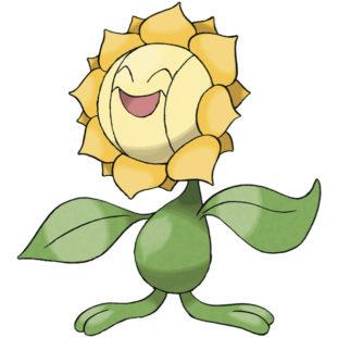 Sunflora 47