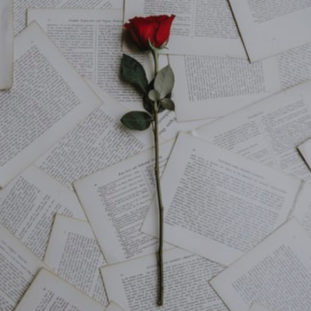 Rose Letters 73