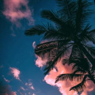 Sky Dreams 77