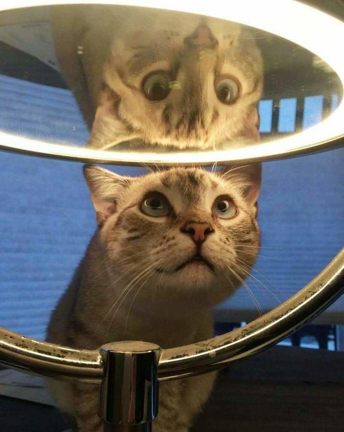 Pets versus mirrors 11