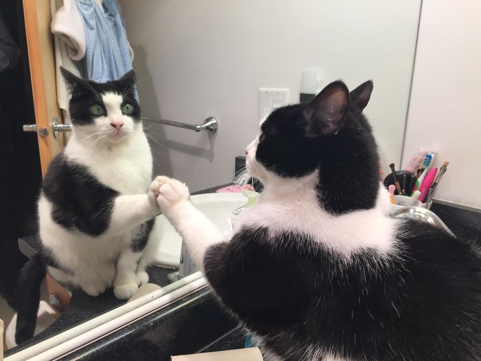 Pets versus mirrors 16
