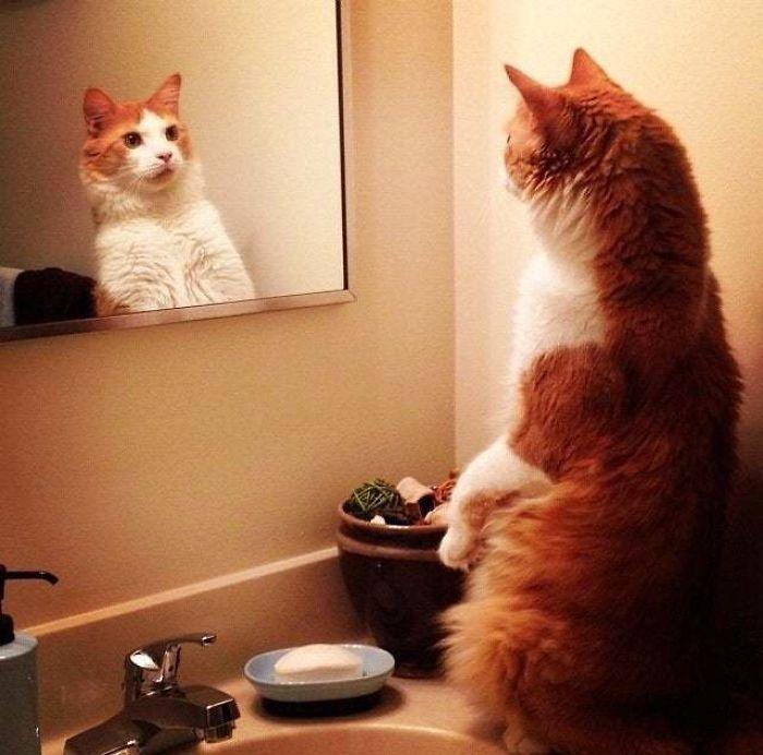 Pets versus mirrors 13