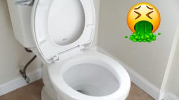 Things that are dirtier than a toilet seat