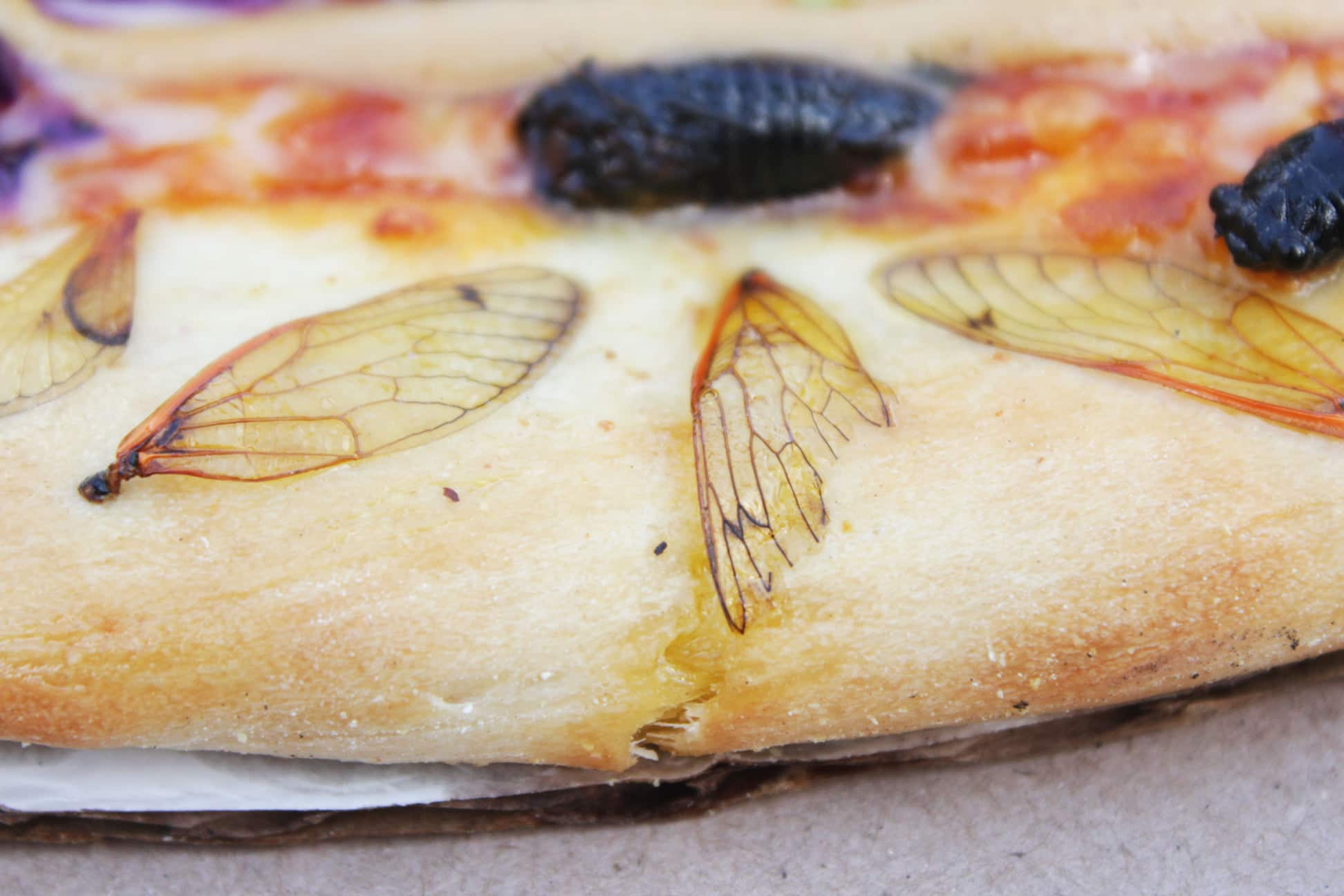 A restaurant made a cicada pizza and taste-testers liked it 17