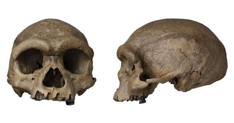 Scientists discover a potential new ancient human species 14