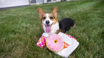 Dunkin' Donuts releases new dog toys ahead of its 'Cup for Pup' program 17