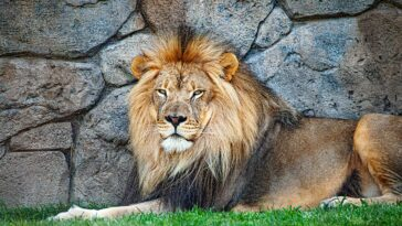 Oakland Zoo vaccinates its animals against Covid-19