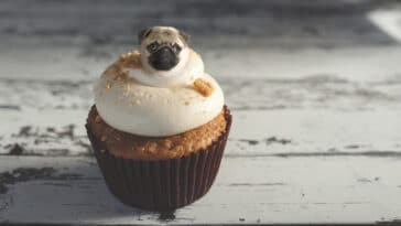 What dogs would look like edited onto food 8
