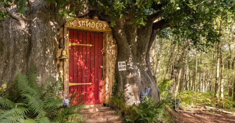 Airbnb is renting out a Winnie the Pooh house 16