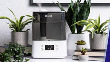 what is the best humidifier for plants